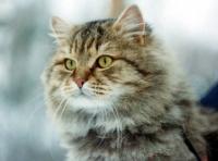 Кошки в Петербурге