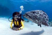 Дайвинг и красота подводных глубин